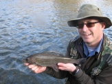 Wye Valley Grayling