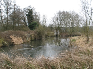 The Kennet in normal winter conditions