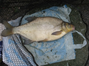 4lb 12oz Bream