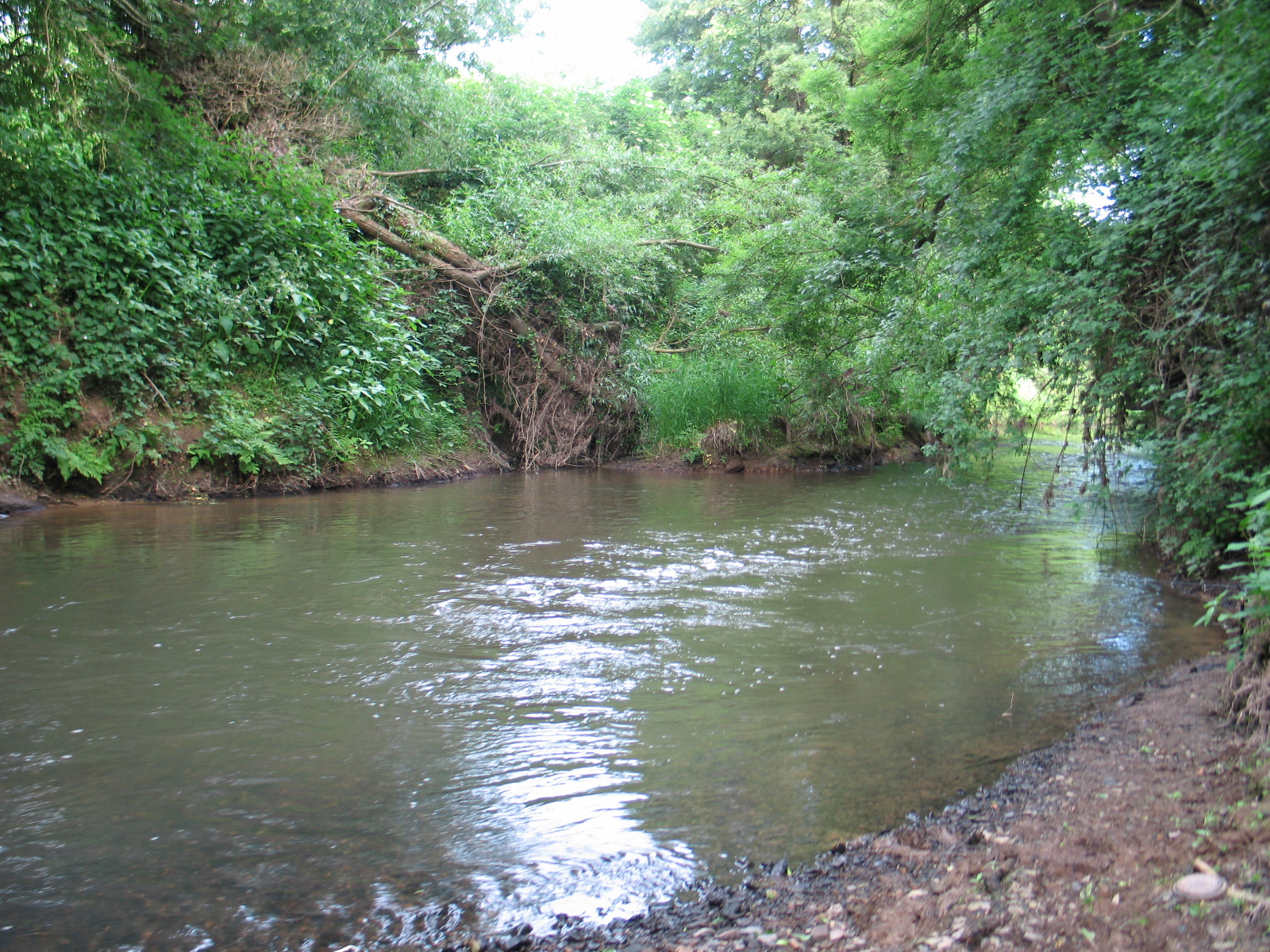 Small river barbel fis...