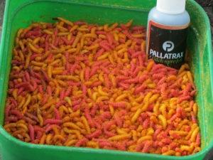 Maggots - Pallatrax Style