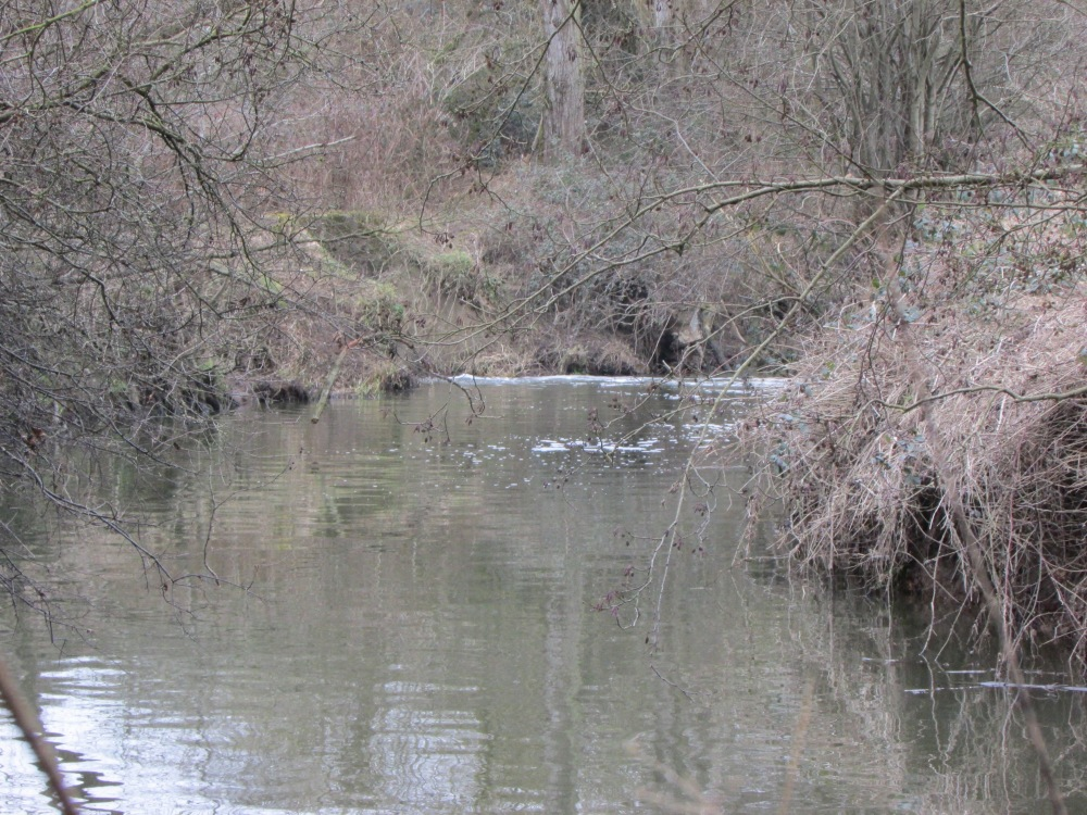 Kent and Sussex Chub and Carp (3/6)
