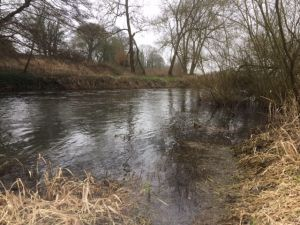 The Hampshire Avon