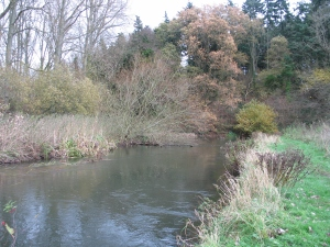 The Lower Itchen Fishery
